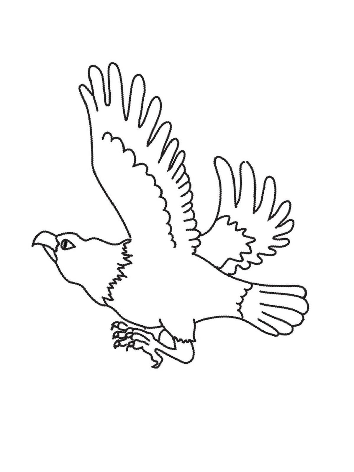 Adler Zeichnungen Zum Ausmalen Das Beste Von Adler Ausmalbilder Für Kinder Gratis Einzigartig Ausmalbilder Adler Sammlung