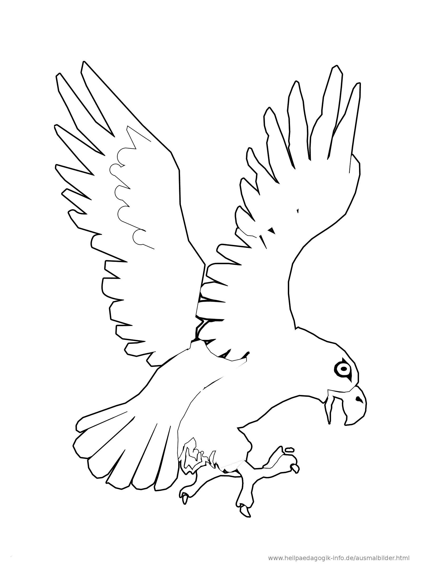 Adler Zeichnungen Zum Ausmalen Einzigartig 44 Elegant Ausmalbilder Adler Malvorlagen Sammlungen Stock