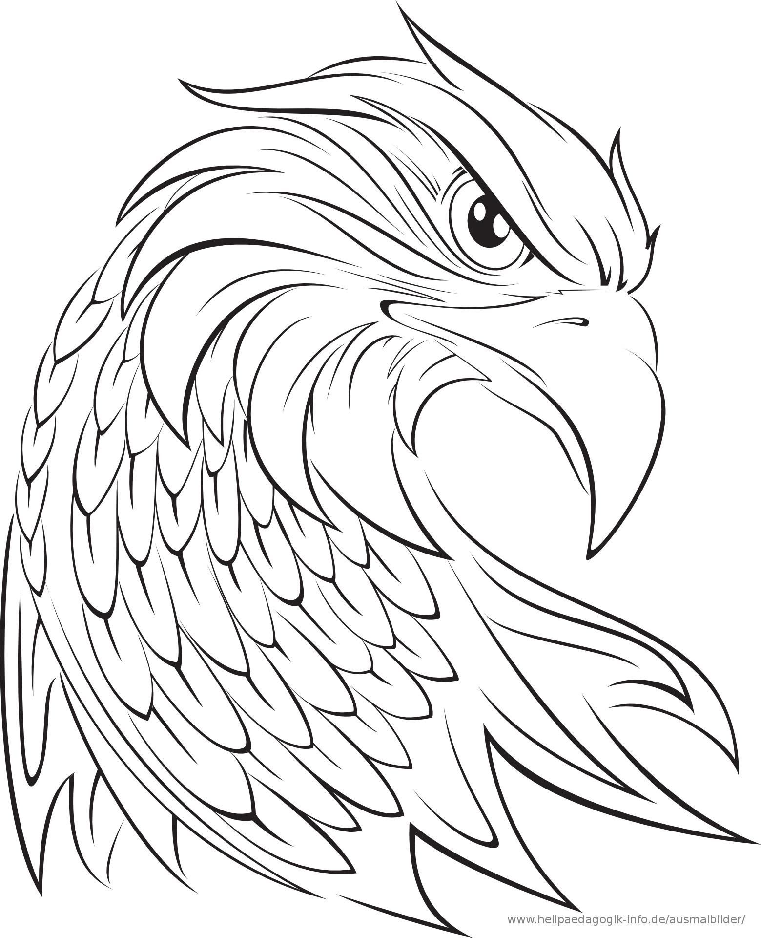 Adler Zeichnungen Zum Ausmalen Einzigartig Adler Ausmalbilder Für Kinder Gratis Einzigartig Ausmalbilder Adler Galerie