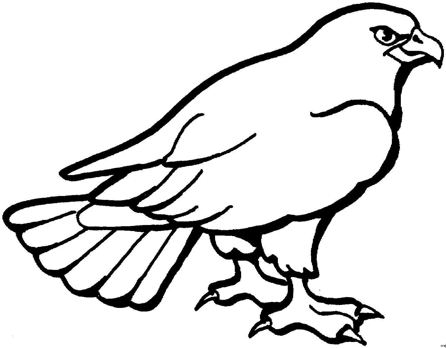 Adler Zeichnungen Zum Ausmalen Genial 44 Elegant Ausmalbilder Adler