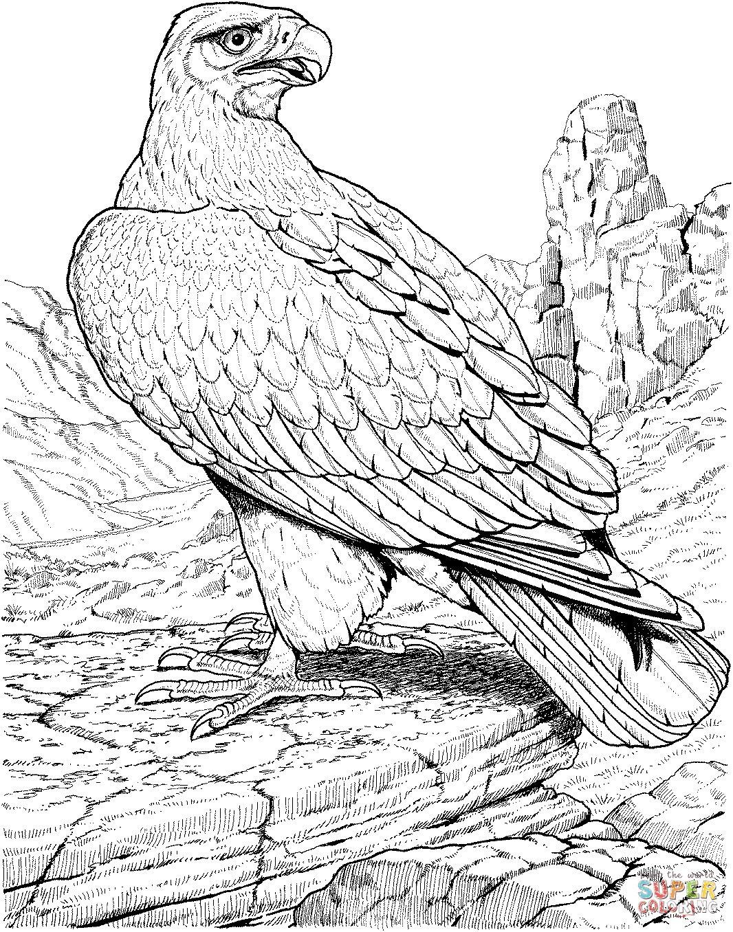 Adler Zeichnungen Zum Ausmalen Frisch Adler Ausmalbilder Luxus Ausmalbilder Iron Man Uploadertalk Fotos