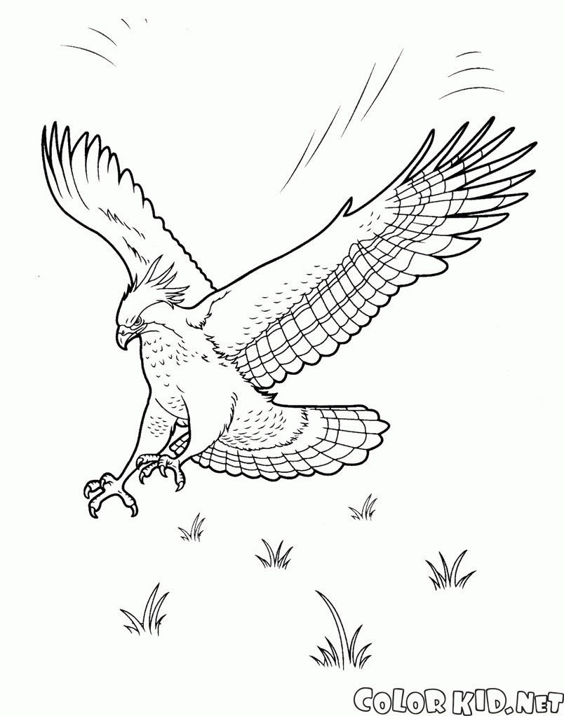 Adler Zeichnungen Zum Ausmalen Genial Adler Ausmalbilder Für Kinder Gratis Einzigartig Ausmalbilder Adler Sammlung