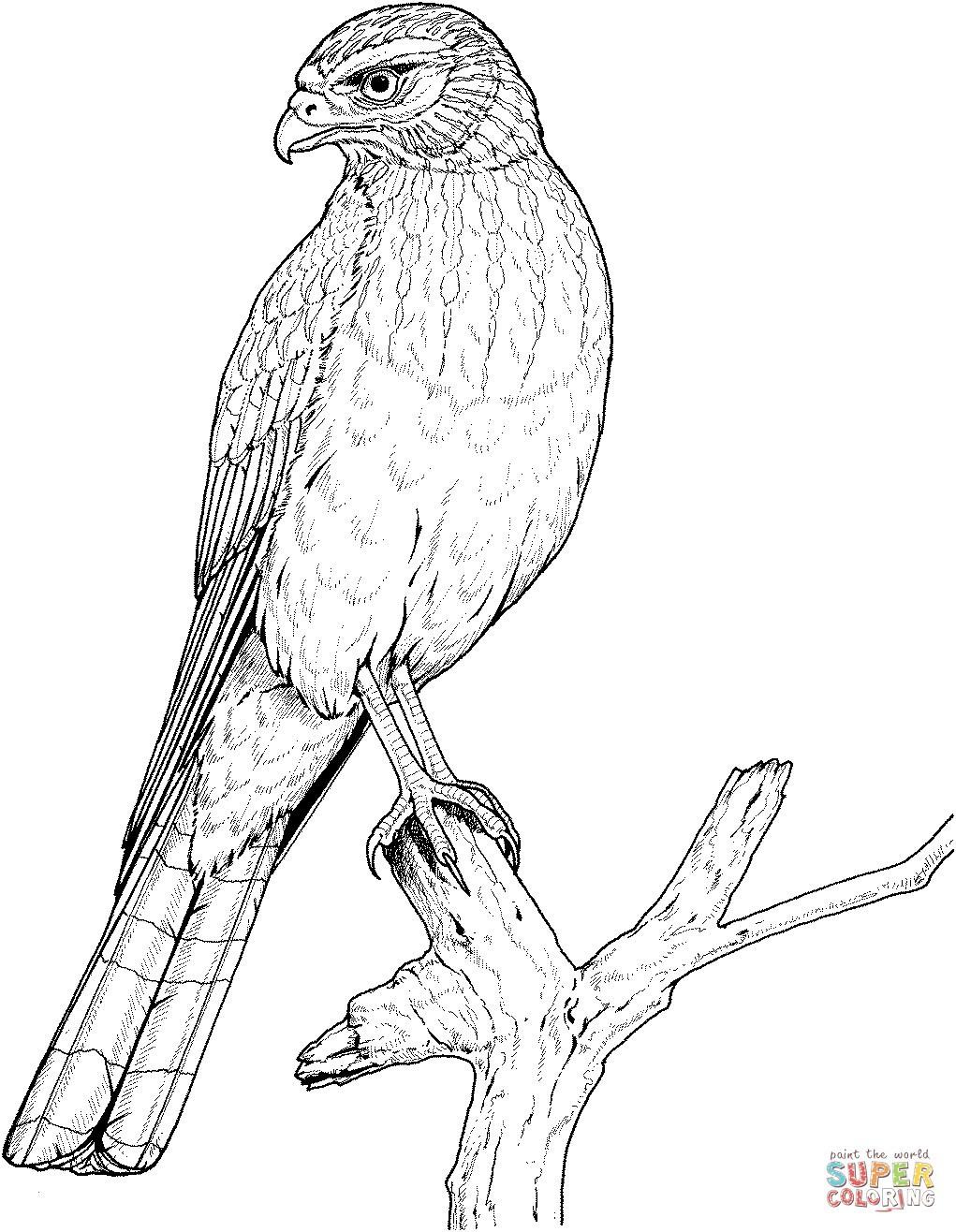 Adler Zeichnungen Zum Ausmalen Inspirierend 44 Elegant Ausmalbilder Adler Malvorlagen Sammlungen Galerie