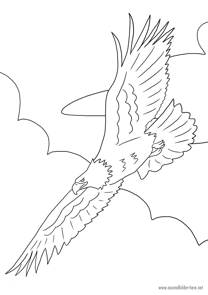 Adler Zeichnungen Zum Ausmalen Neu Adler Ausmalbilder Einzigartig Adler Zum Ausmalen Uploadertalk Das Bild