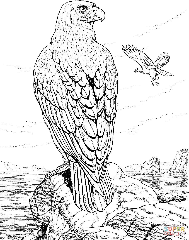 Adler Zeichnungen Zum Ausmalen Neu Adler Ausmalbilder Für Kinder Gratis Einzigartig Ausmalbilder Adler Bild