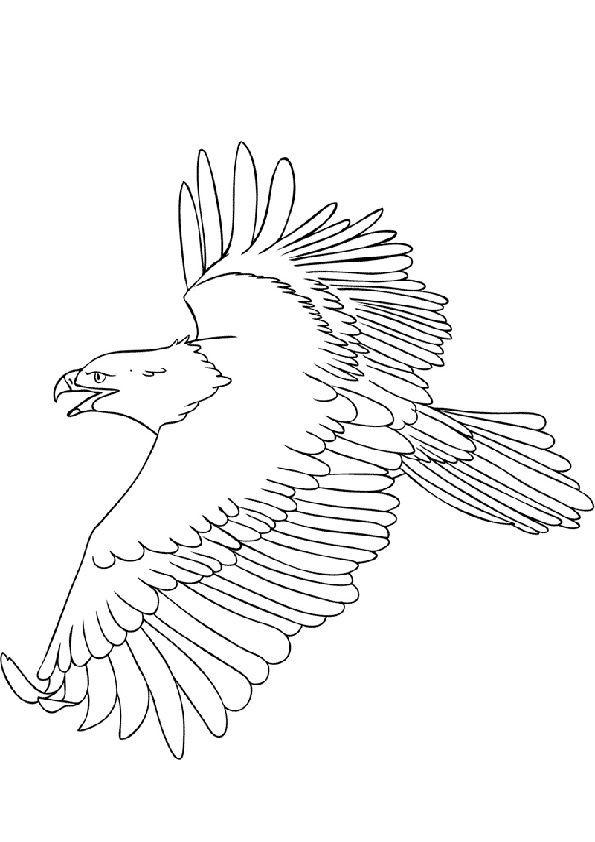 Adler Zeichnungen Zum Ausmalen Neu Ausmalbilder Adler Und Schlange Adler Malvorlagen Bilder