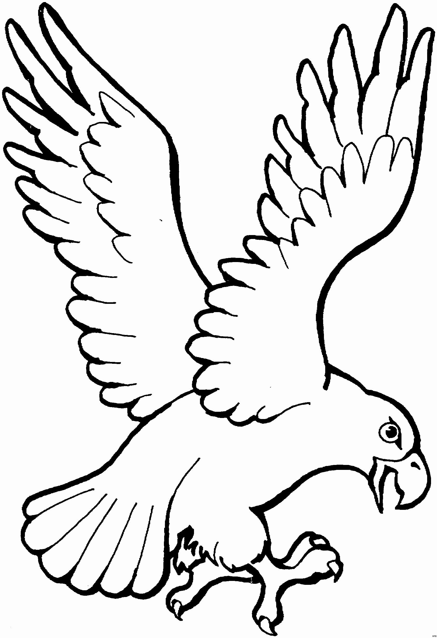 Adler Zeichnungen Zum Ausmalen Neu Nineplanetshiphop Das Bild