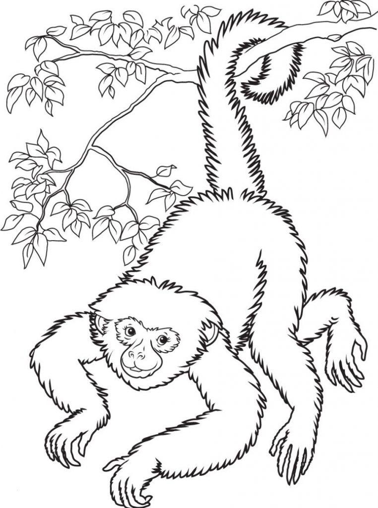 Affen Zum Ausmalen Einzigartig Druckbare Malvorlage Ausmalbilder Affen Beste Druckbare Das Bild