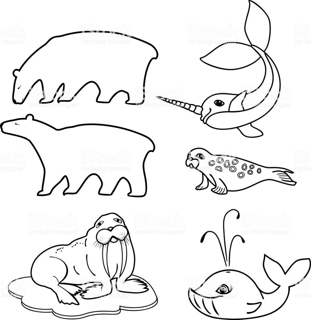 Anspruchsvolle Mandalas Zum Ausdrucken Das Beste Von Malvorlagen Reihe Von Verschiedenen Ictiere Der Polaren Fauna Frisch Stock