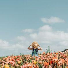 810 besten Flower Power Bilder auf Pinterest in 2018