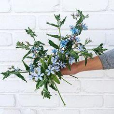Ausmalbilder Blumenstrauß Mit Vase Einzigartig 810 Besten Flower Power Bilder Auf Pinterest In 2018 Das Bild