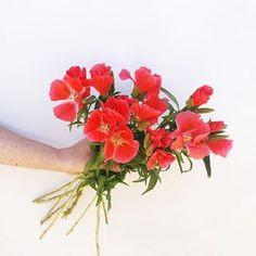 Ausmalbilder Blumenstrauß Mit Vase Einzigartig 810 Besten Flower Power Bilder Auf Pinterest In 2018 Fotografieren