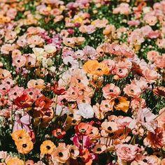 Ausmalbilder Blumenstrauß Mit Vase Frisch 810 Besten Flower Power Bilder Auf Pinterest In 2018 Das Bild