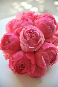 Ausmalbilder Blumenstrauß Mit Vase Inspirierend Die 1588 Besten Bilder Von Blumen Flowers Pastell Peonien Rosen Sammlung
