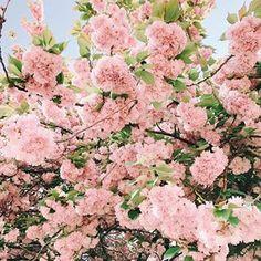 Ausmalbilder Blumenstrauß Mit Vase Neu 810 Besten Flower Power Bilder Auf Pinterest In 2018 Fotos