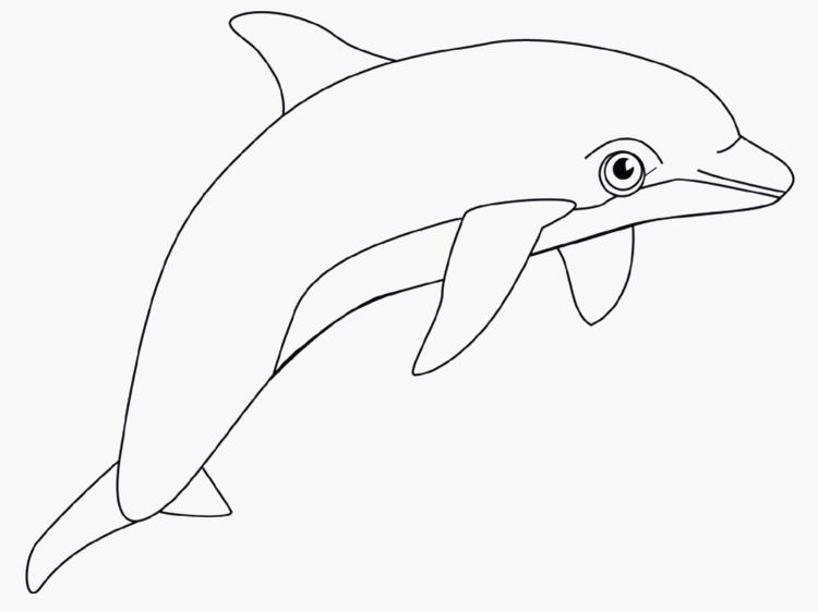 Ausmalbilder Delphine Zum Ausdrucken Frisch Malvorlage Delphin Zum Ausdrucken Idee Frisches Delfin Vorlage Fotos