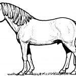Ausmalbilder Filly Pferd Inspirierend Bayern Ausmalbilder Schön Igel Grundschule 0d Archives Schön Filly Bilder