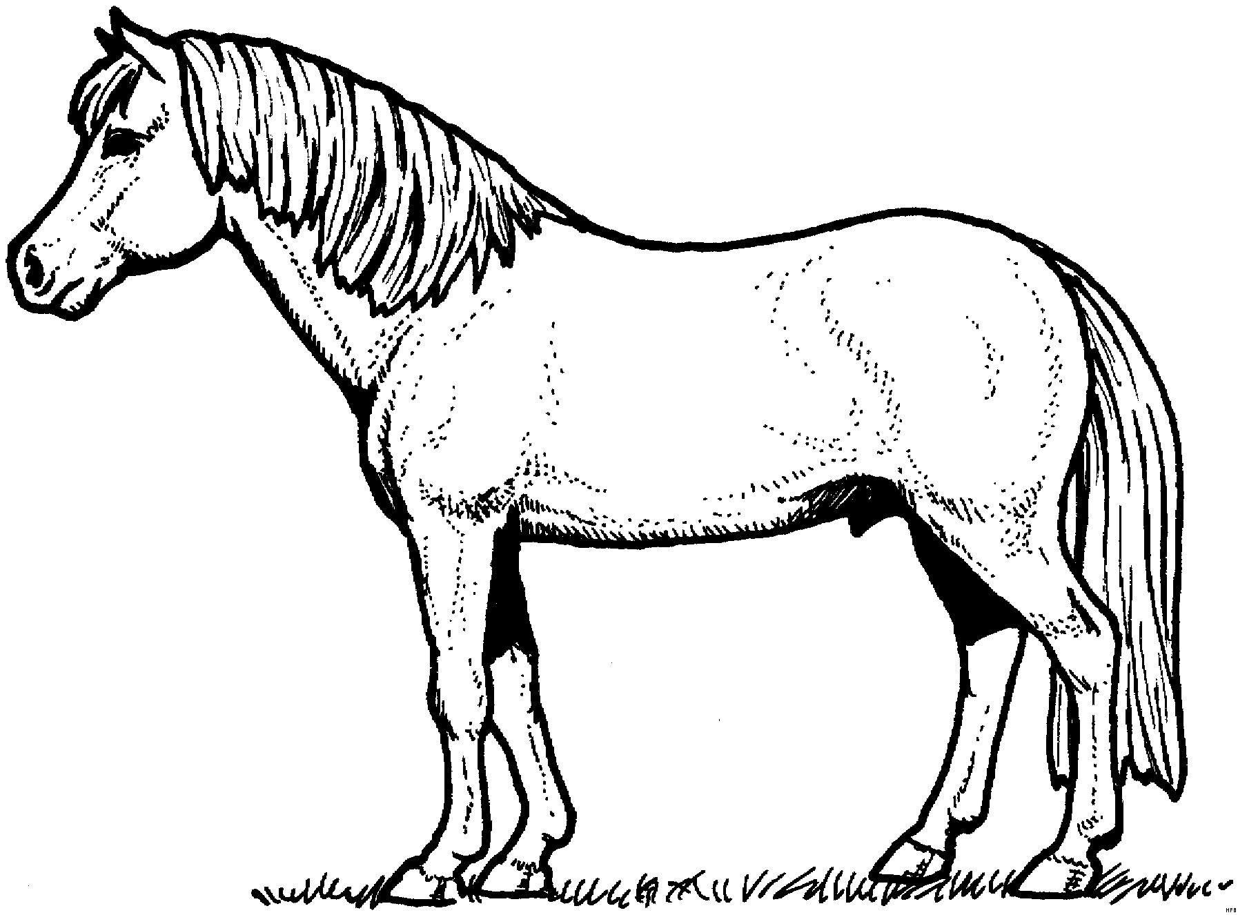 Ausmalbilder Filly Pferde Inspirierend 30 Filly Pferd Ausmalbilder forstergallery Bild