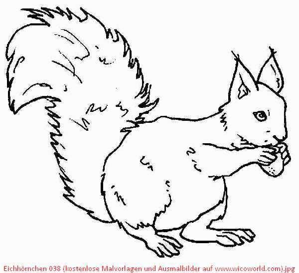 Ausmalbilder Herbst Eichhörnchen Einzigartig Pin Malvorlagen Ausmalbilder Eichhoernchen Ausmalen … – Malvor Stock