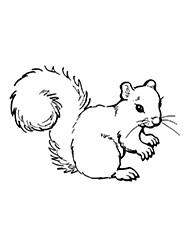 Ausmalbilder Herbst Eichhörnchen Frisch Planse De Colorat Cu Animale Salbatice Bilder