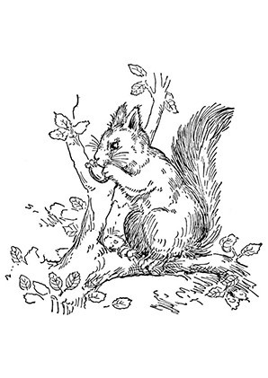 Ausmalbilder Herbst Eichhörnchen Inspirierend Ausmalbilder Eichh Rnchen Frisst Eine Nuss Eichh Rnchen Bild