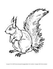 Ausmalbilder Herbst Eichhörnchen Inspirierend Ausmalbilder Eichhhörnchen 1 6 Ausmalbilder Herbst Bild