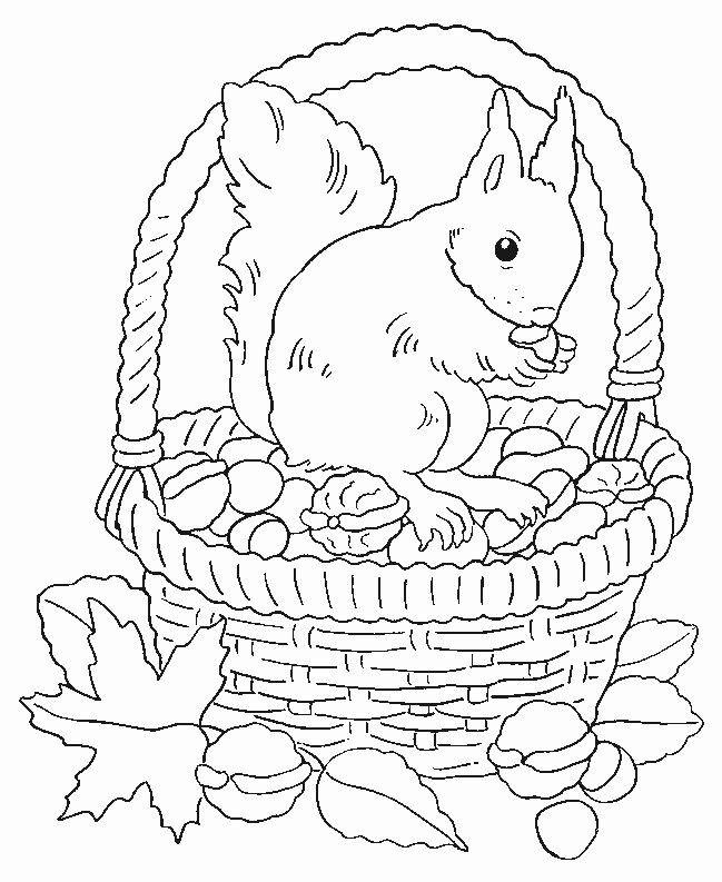 """Ausmalbilder Herbst Eichhörnchen Inspirierend Über 1 000 Ideen Zu """"eichhörnchen Auf Pinterest Fotos"""