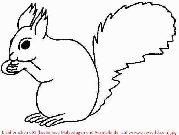 Ausmalbilder Herbst Eichhörnchen Neu Eichhörnchen Bilder Malvorlagen Das Bild