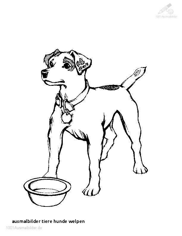 Ausmalbilder Hunde Und Katzen Einzigartig Colorprint Zeichnungen Für Kinder Kostenlos Galerie