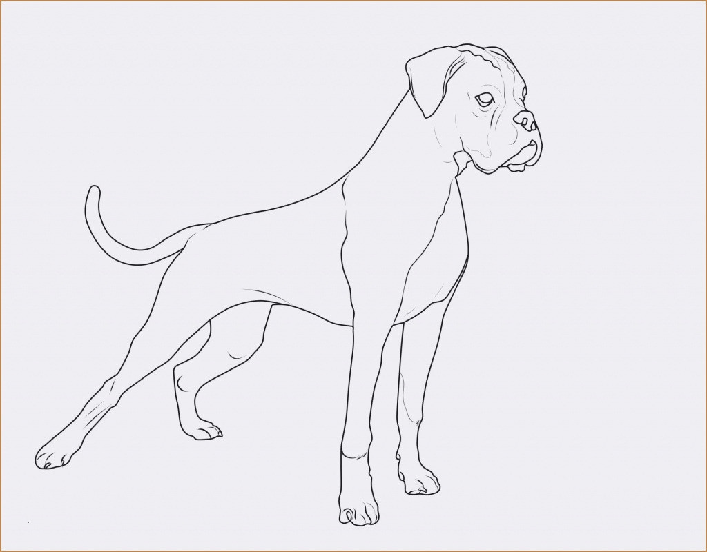 Ausmalbilder Hunde Und Katzen Genial Spannende Coloring Bilder Malvorlagen Katzen Und Hunde Fotos