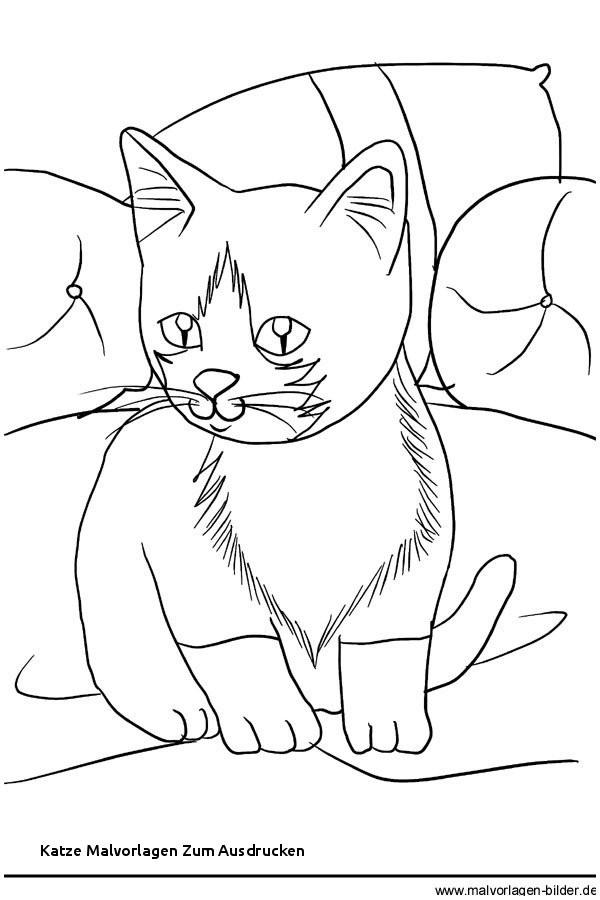 Ausmalbilder Katze Und Hund Genial Katze Malvorlagen Zum Ausdrucken Kostenloses Ausmalbild Hund Bild