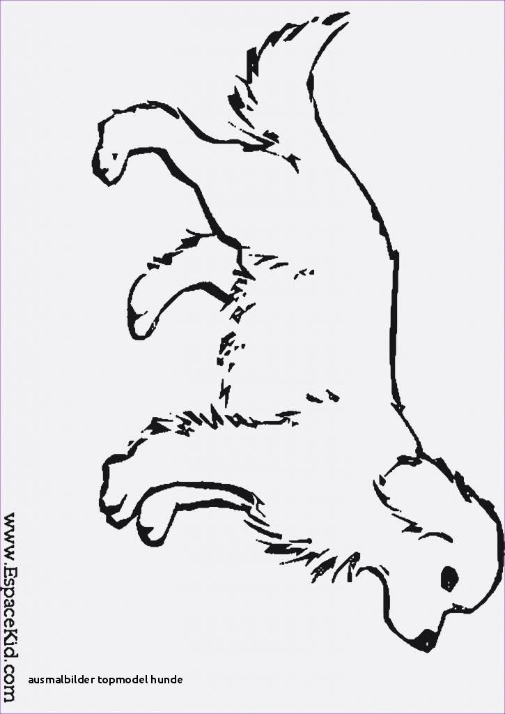 Ausmalbilder Katze Und Hund Neu Ausmalbilder topmodel Hunde Ausmalbilder Hunde Zum Ausdrucken Bilder