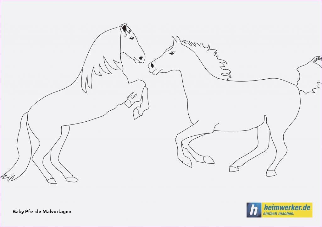 Ausmalbilder Little Pony Das Beste Von Baby Pferde Malvorlagen Spannende Coloring Bilder Ausmalbilder Pony Fotos