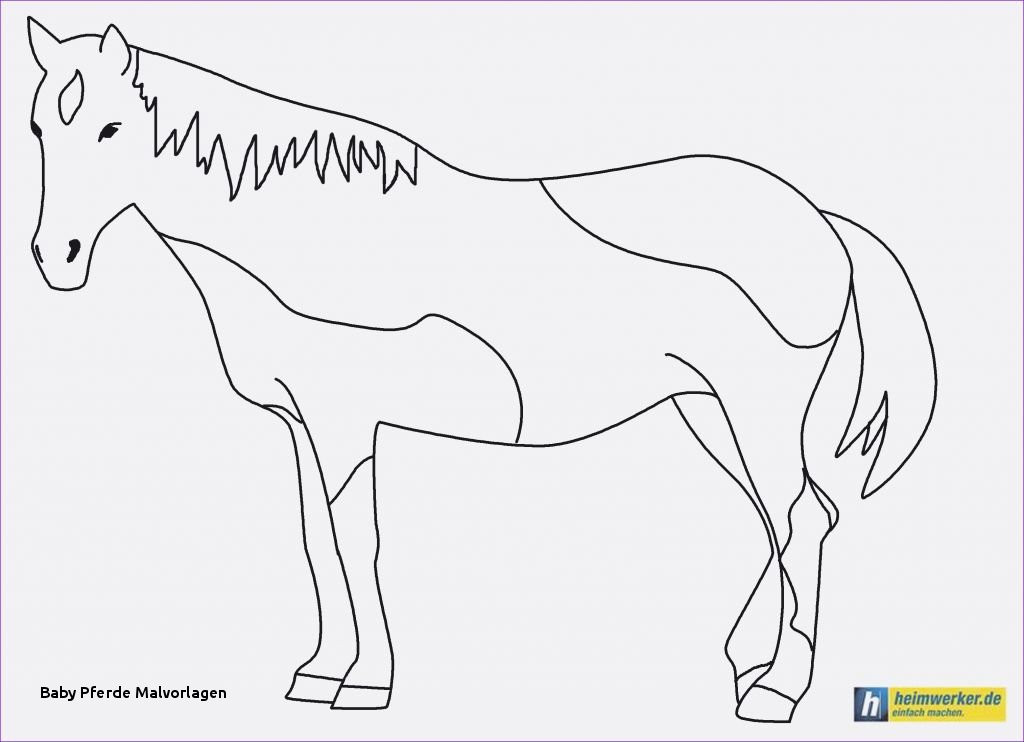 Ausmalbilder Little Pony Genial Baby Pferde Malvorlagen Spannende Coloring Bilder Ausmalbilder Pony Bild