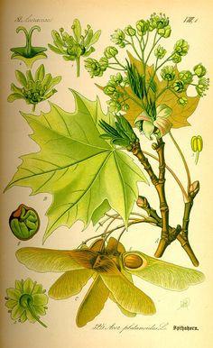 Ausmalbilder Mascha Und Der Bär Das Beste Von 79 Besten Botanische Namen Bilder Auf Pinterest Bilder
