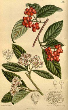Ausmalbilder Mascha Und Der Bär Das Beste Von 79 Besten Botanische Namen Bilder Auf Pinterest Stock