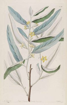 Ausmalbilder Mascha Und Der Bär Einzigartig 79 Besten Botanische Namen Bilder Auf Pinterest Stock