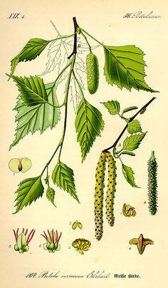 Ausmalbilder Mascha Und Der Bär Frisch 79 Besten Botanische Namen Bilder Auf Pinterest Galerie
