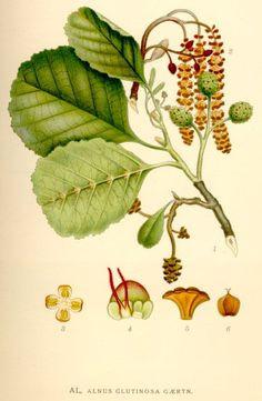 Ausmalbilder Mascha Und Der Bär Frisch 79 Besten Botanische Namen Bilder Auf Pinterest Stock