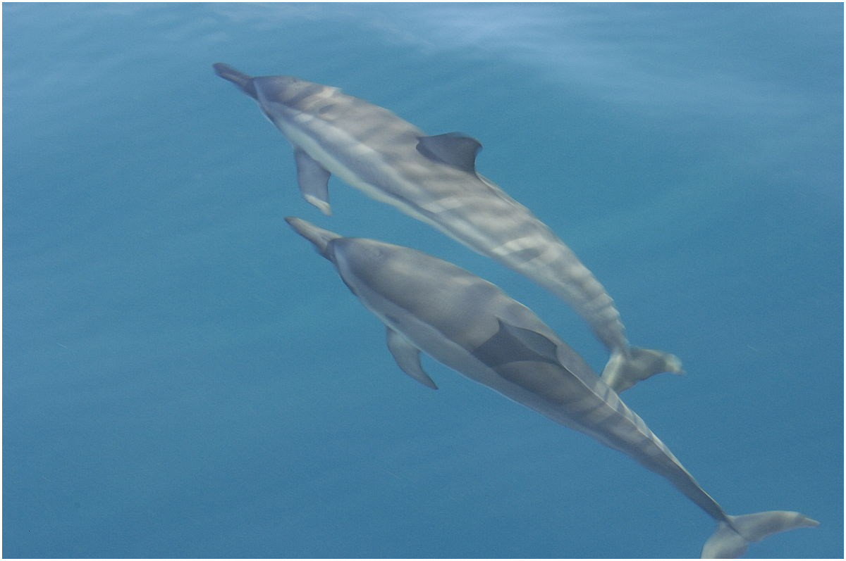 Ausmalbilder Meerjungfrau Mit Delfin Neu 31 Neu Delfin Ausmalbild – Große Coloring Page Sammlung Fotografieren