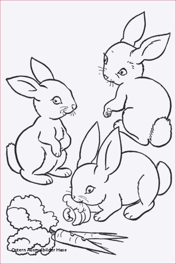 Ausmalbilder Ostern Hase Inspirierend 21 Ostern Ausmalbilder Hase Colorbooks Colorbooks Das Bild