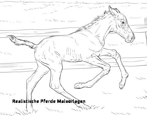 Ausmalbilder Pferde Mit Fohlen Das Beste Von 28 Realistische Pferde Malvorlagen Das Bild
