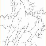 Ausmalbilder Pferde Mit Fohlen Das Beste Von Bayern Ausmalbilder Schön Igel Grundschule 0d Archives Schön Pferde Fotos