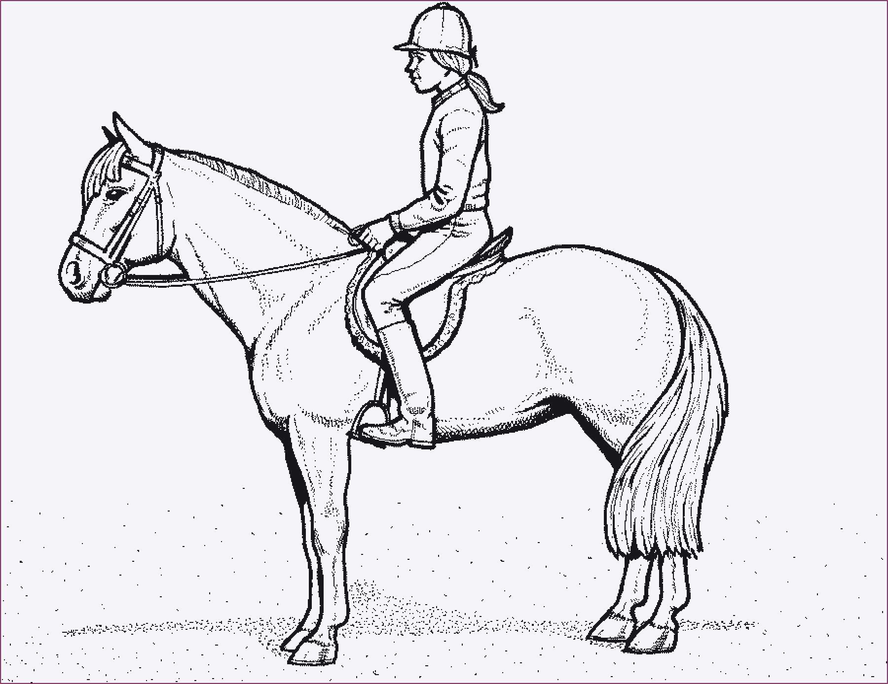 Ausmalbilder Pferde Mit Fohlen Einzigartig 40 Skizze Malvorlagen Pferde Mit Fohlen Treehouse Nyc Fotos