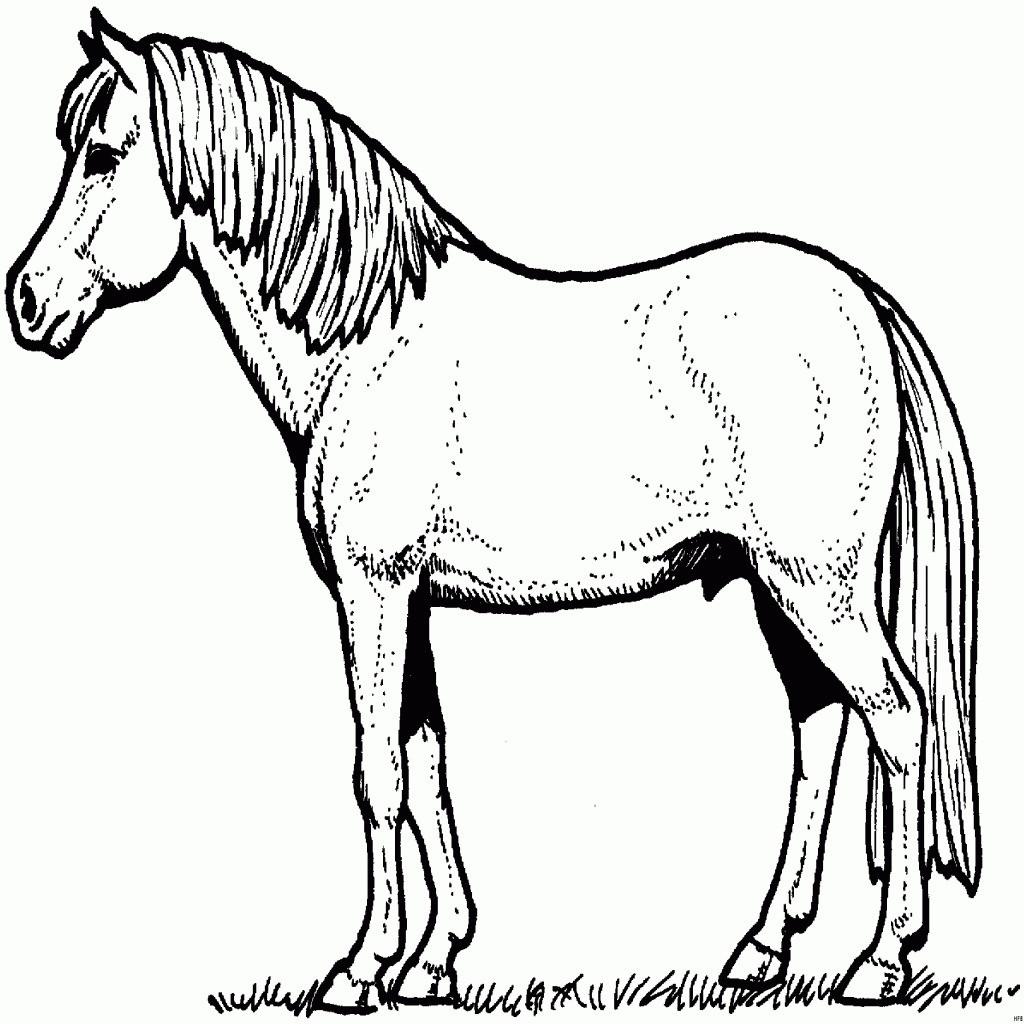 Ausmalbilder Pferde Mit Fohlen Frisch 37 Ausmalbilder Pferd Mit Fohlen Scoredatscore Best Malvorlagen Fotos