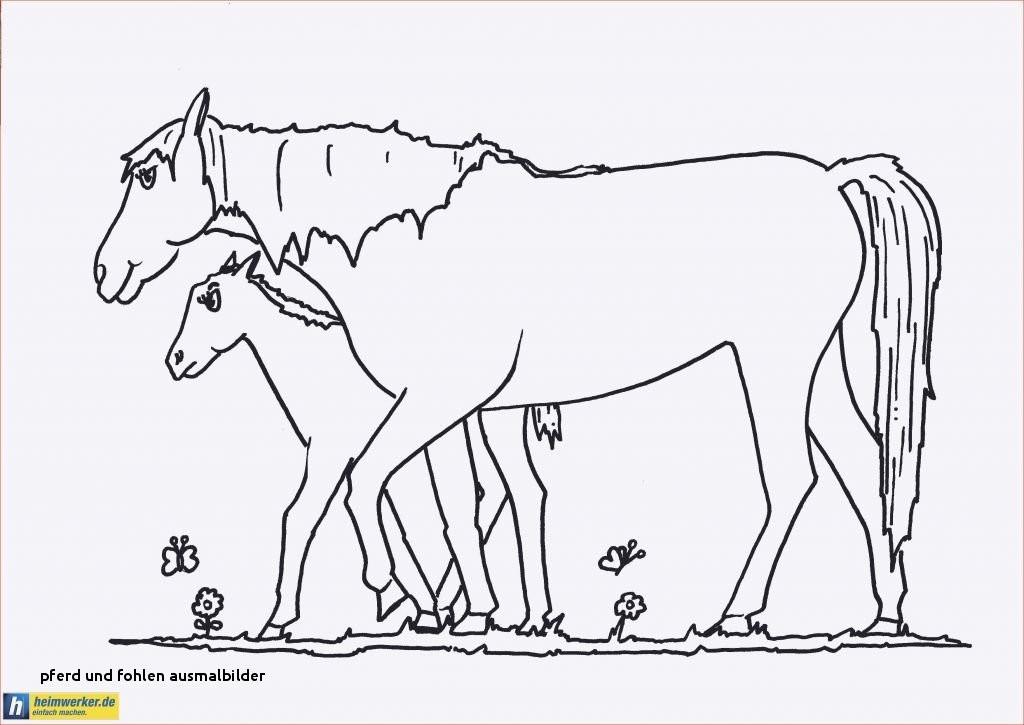 Ausmalbilder Pferde Mit Fohlen Frisch Pferd Und Fohlen Ausmalbilder 37 Ausmalbilder Erwachsene Pferde Das Bild