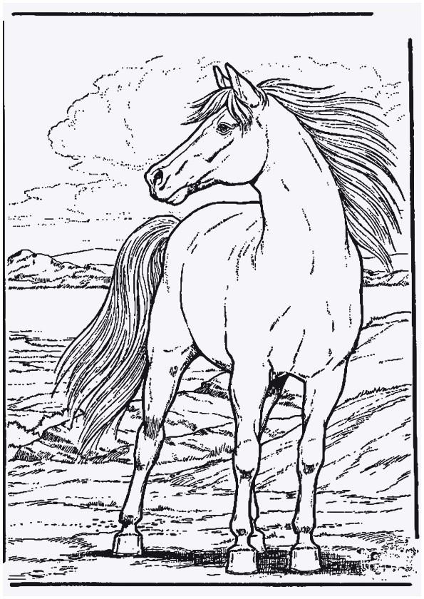 Ausmalbilder Pferde Mit Fohlen Frisch Pferde Bilder Zum Ausmalen Frisch 37 Ausmalbilder Pferd Mit Fohlen Galerie