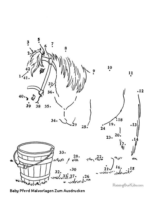Ausmalbilder Pferde Mit Fohlen Genial Baby Pferd Malvorlagen Zum Ausdrucken Suche Eine Mini Shetty Stock