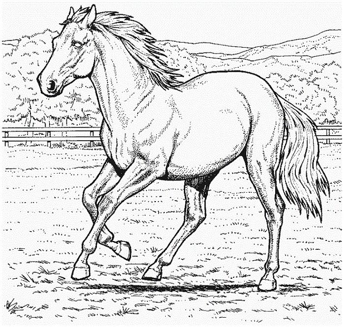 Ausmalbilder Pferde Mit Reiterin Einzigartig Ausmalbilder Pferde Zum Ausdrucken 771 Malvorlage Alle Ausmalbilder Stock