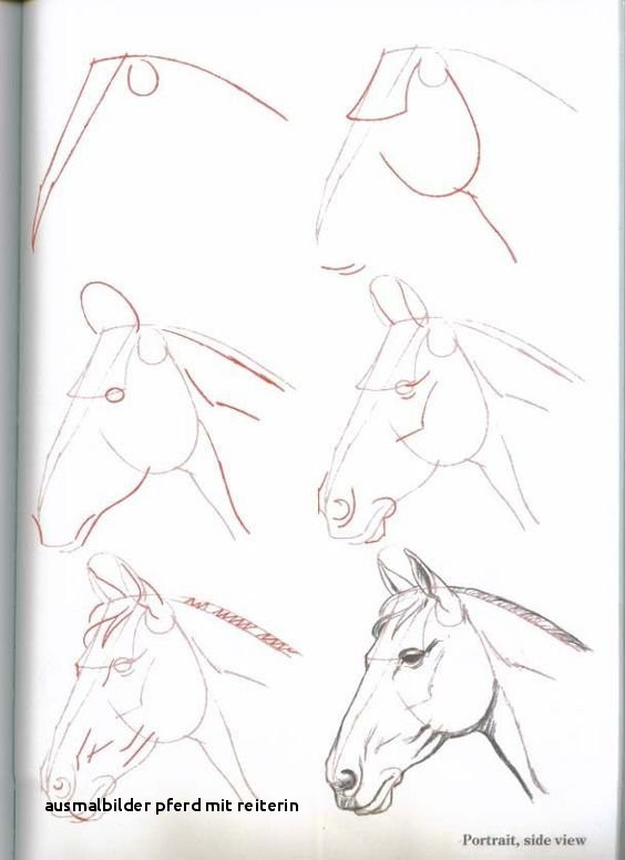Ausmalbilder Pferde Mit Reiterin Genial Ausmalbilder Pferd Mit Reiterin Malvorlagen Pferde A4 Colorprint Bilder